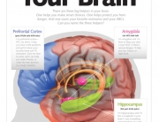 getting-to-know-your-brain-1